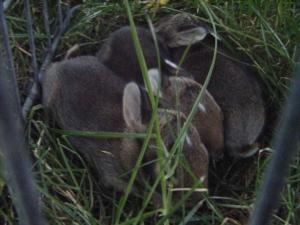Snuggles!
