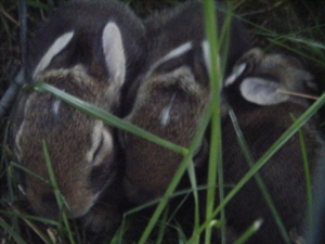 Close up baby bunnies!