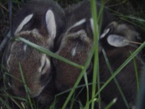 Close up baby bunnies!